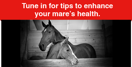 Helpful mare care tips